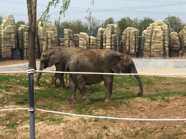 濮阳东北庄野生动物园开园啦